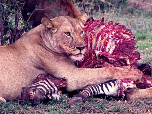 Lioness, 2010