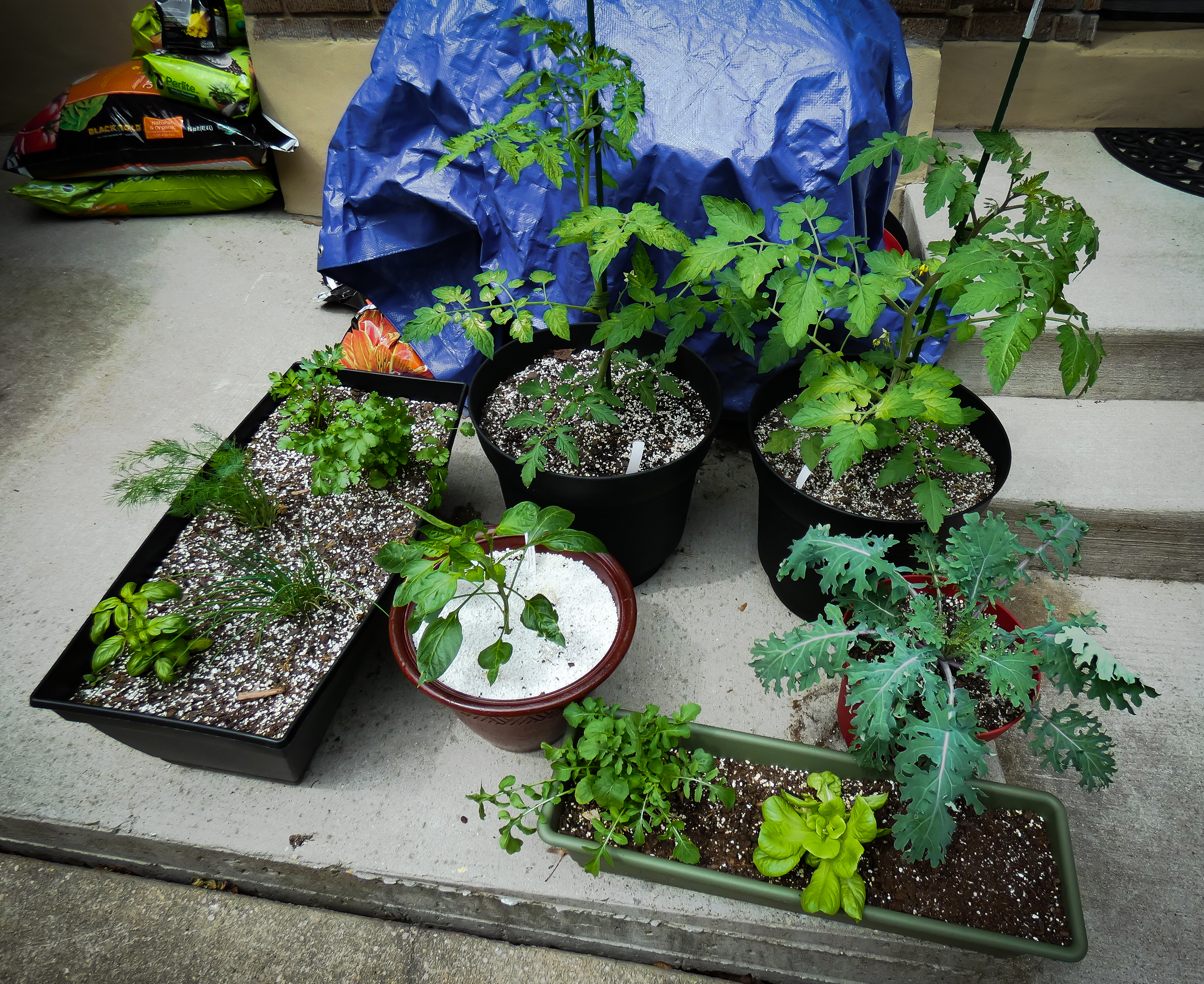 Garden Update 5-19-2